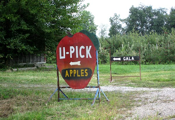 U pick i pick we all pick apples happy money saver for Where can i go apple picking near me