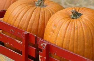 Pumpkin Patches, Fall Festivals and U-Pick Pumpkin Farms in Pacific NW 2013