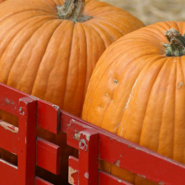 Pumpkin Patches, Fall Festivals and U-Pick Pumpkin Farms in Pacific NW 2015