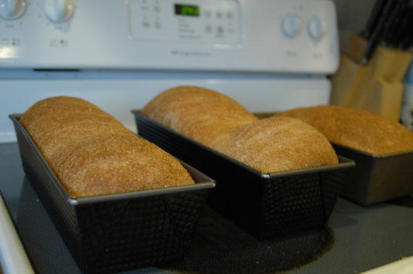 bread-soap-176