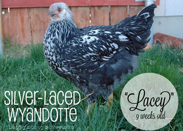 Lacey9weeks