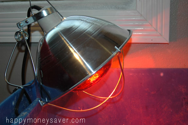 Baby Chick Heat Lamp