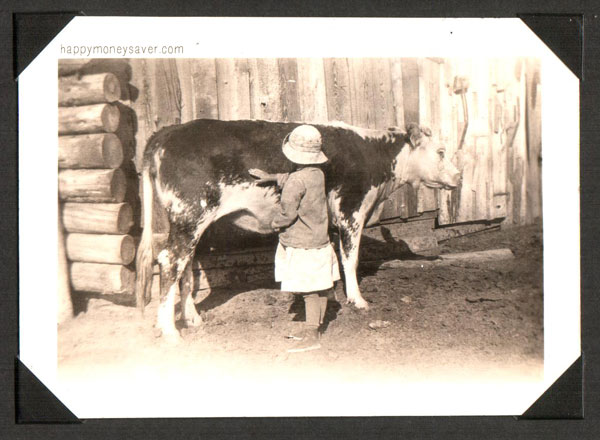 Cows on the Farm early 1900's