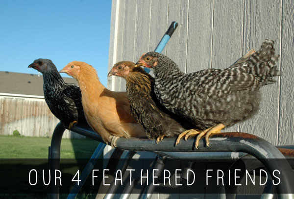 fourfeatheredfriends