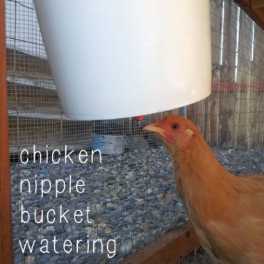Building a Chicken Nipple Waterer using a Plastic Bucket