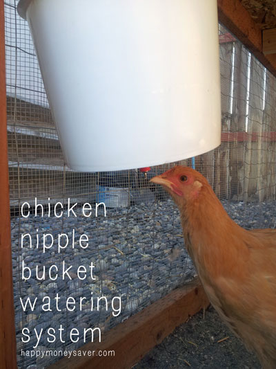 Building a Chicken Nipple Waterer using a Plastic Bucket - Costs under $10, takes only 5 minutes to make and saves you tons of time. I only have to change my chicken water once a week. Plus it keeps the dirt and bacteria out of their water = healthy chickens!  happymoneysaver.com