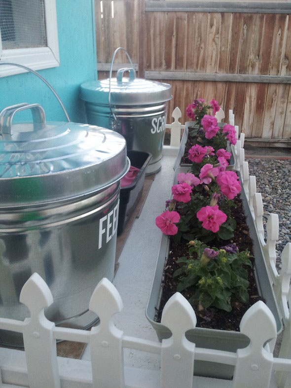 Cute Chicken Coop with 6 Gallon Garbage Cans as chicken feeders