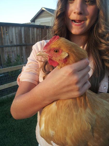 chickens4