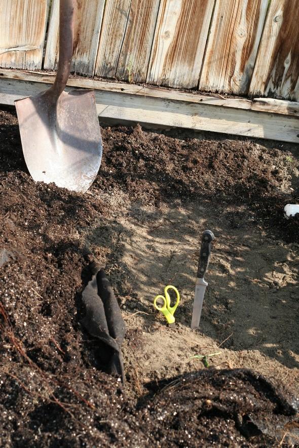 soil garden