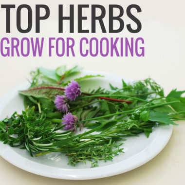 5 Top Herbs to Keep Around for Cooking