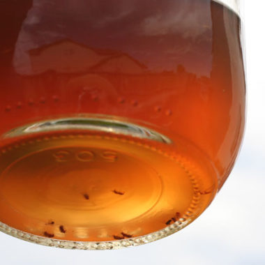 The Best Natural Fruit Fly Trap using Vinegar