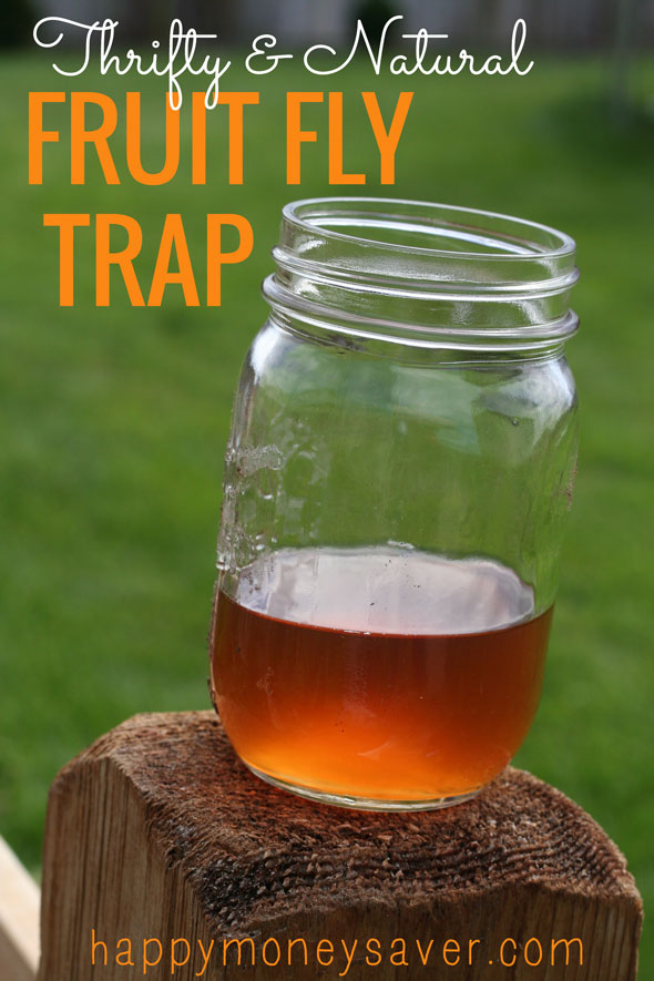 The Best Fruit Fly Trap Using Vinegar And Dish Soap {They