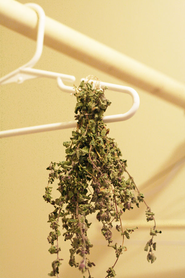 drying my herbs oregano thyme parsley happy money saver. Black Bedroom Furniture Sets. Home Design Ideas