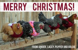 Chicken Sweaters