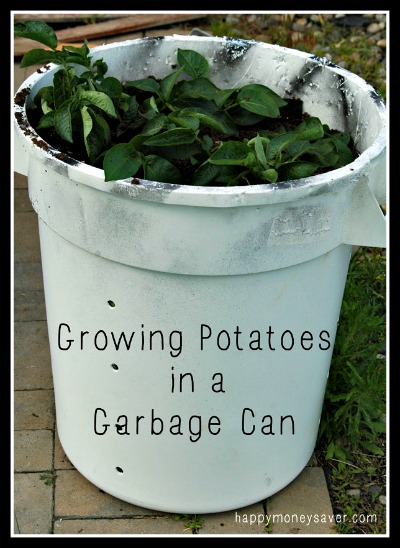 Gardening: Growing potatoes in a Garbage Can