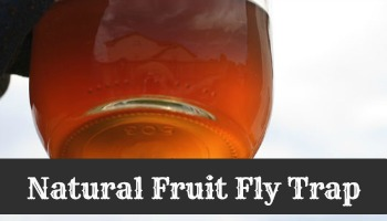fruit-fly-trap-natural final