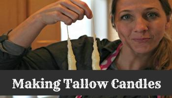 tallow13 final