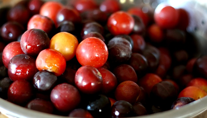 Homemade Wild Plum Jelly- Perfect on a slice of homemade bread!