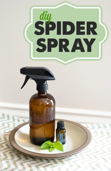 Safe Effective Natural Spider Spray