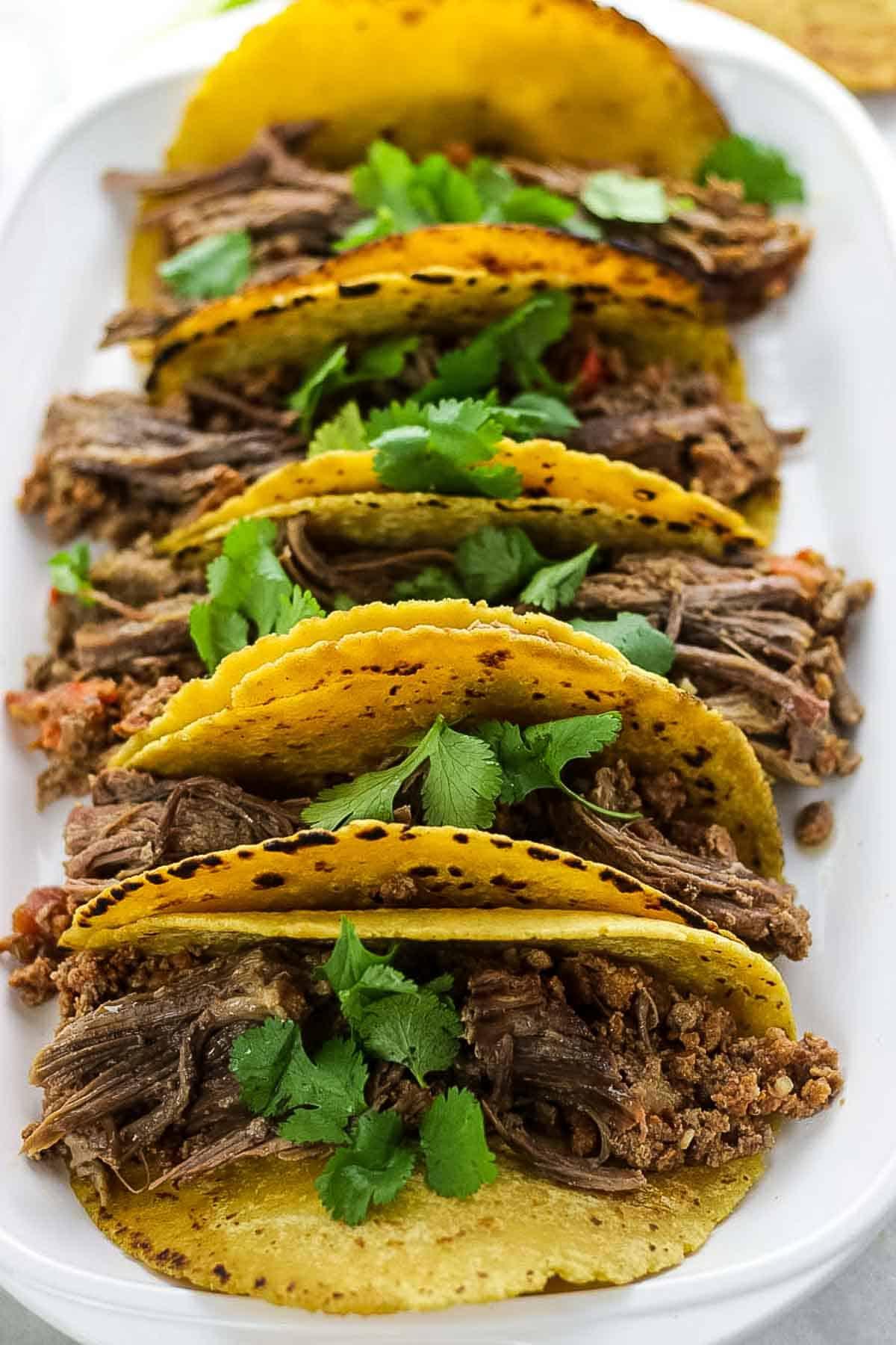Shredded Beef Tacos in corn tortillas with cilantro