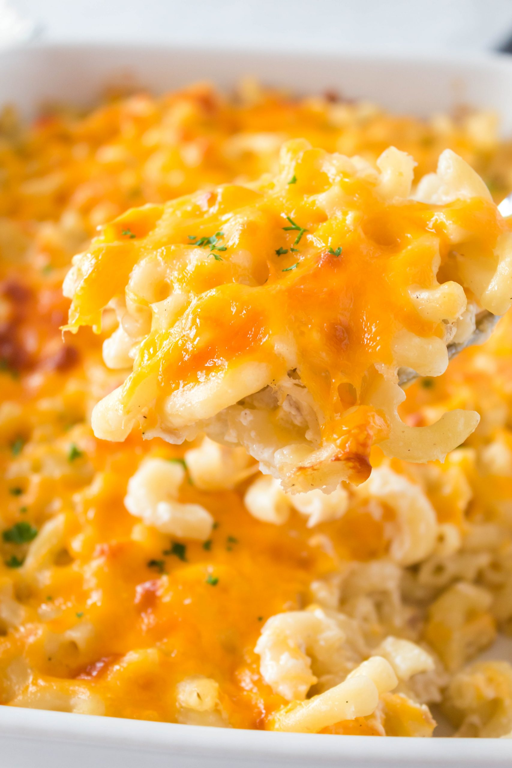 Noodles and cheese casserole with an herb on top.